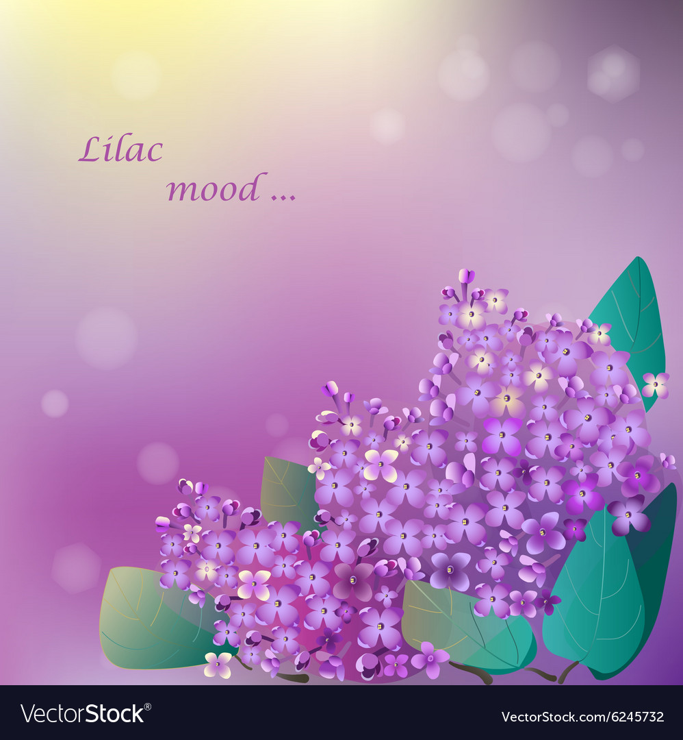 Lilac blooming flower