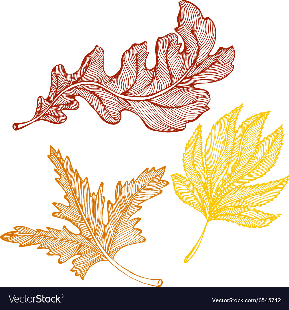 Autumn leaves drawing Royalty Free Vector Image