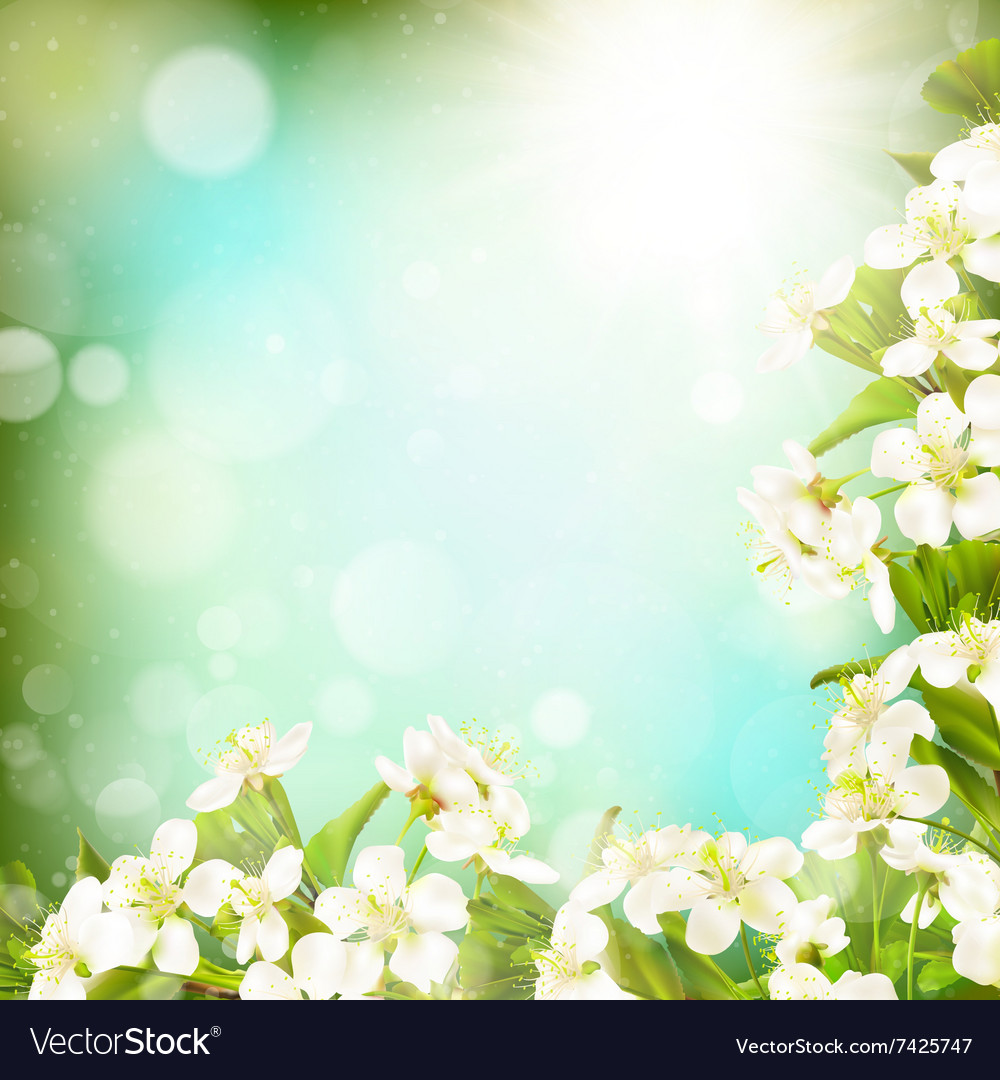 Spring Border Background Eps 10 Royalty Free Vector Image A wide variety of spring border wire options are available to you, such as standard, application, and special use. vectorstock