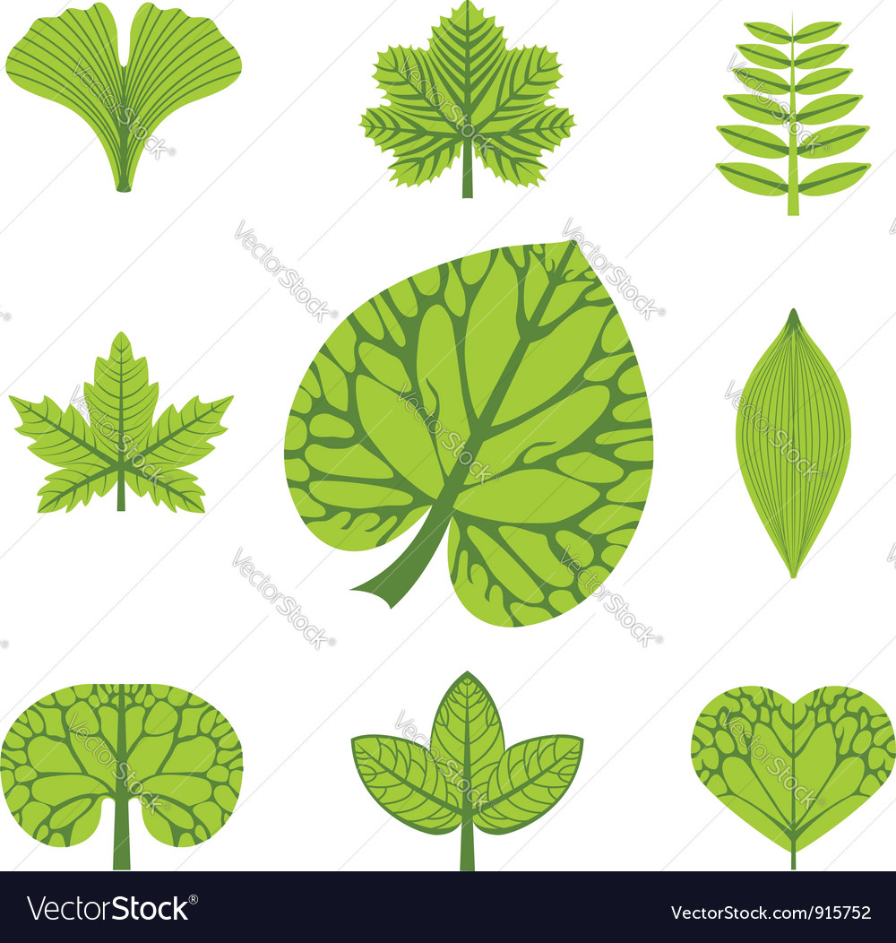 different types of leaves royalty free vector image