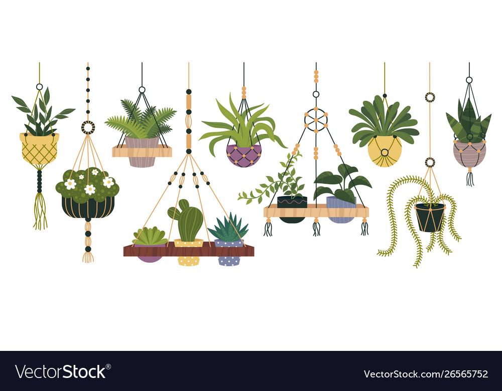 Plants in hanging pots set flowerpot indoor