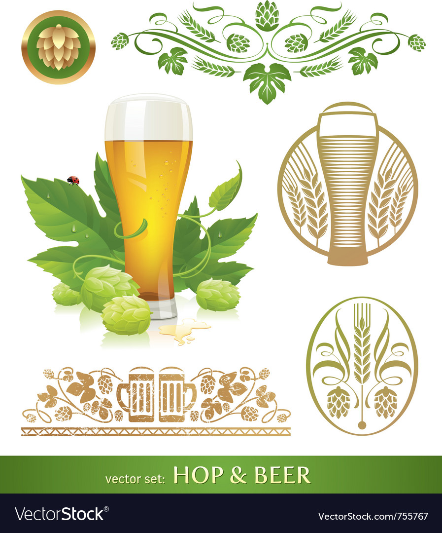 Set - beer hop and brewing vector image