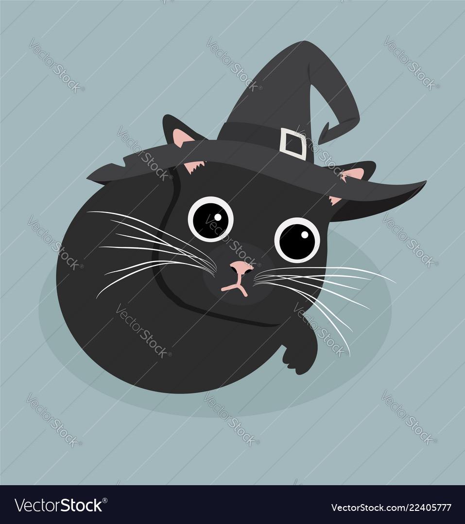 Cute black cat sleep with hat