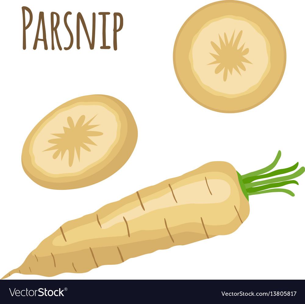 Fresh parsnip vegetable organic vegetarian food
