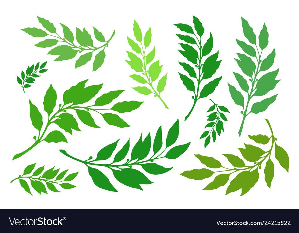 Laurel branches set