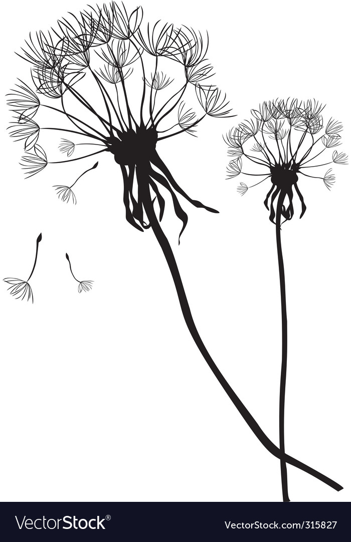 Two black dandelions