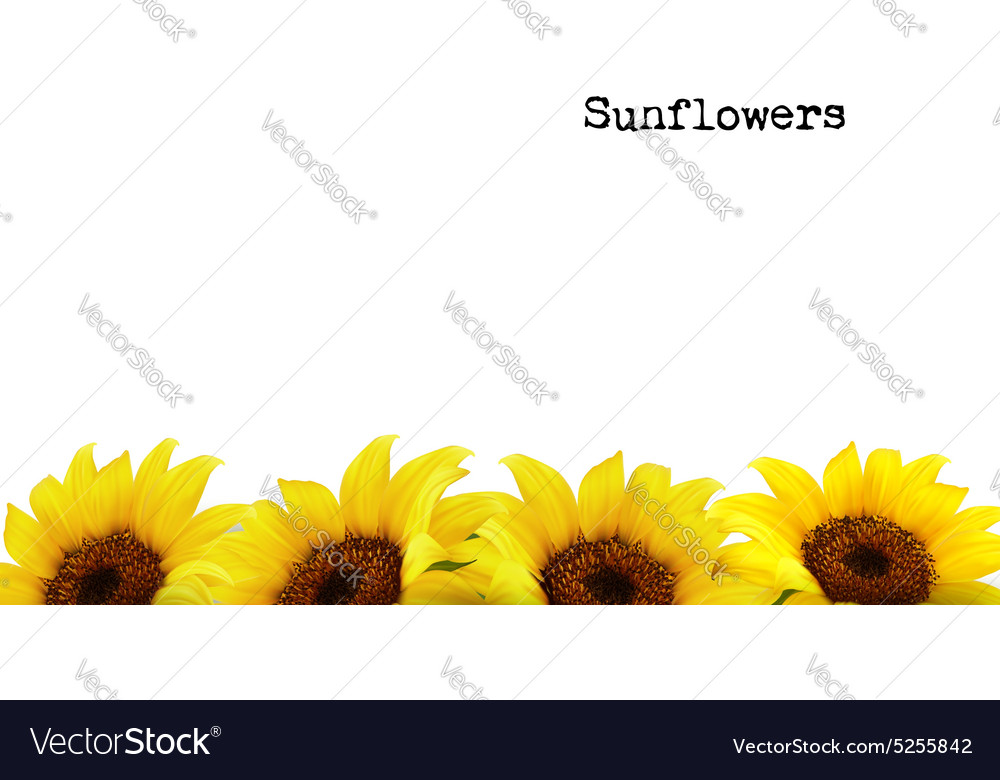 Nature Background With Yellow Sunflowers