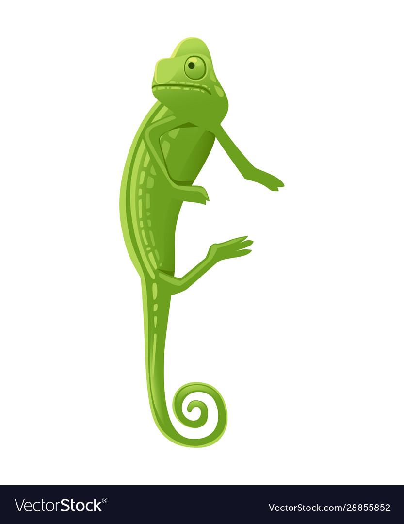 Cute small green chameleon lizard cartoon animal