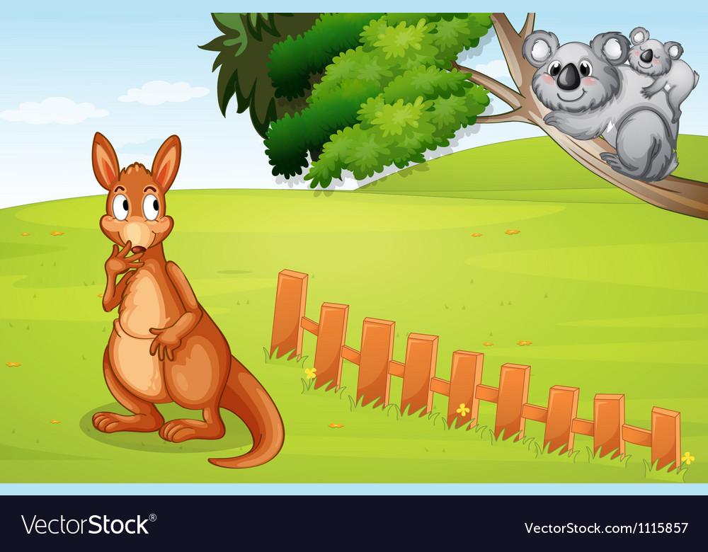 Kangaroo and koalas