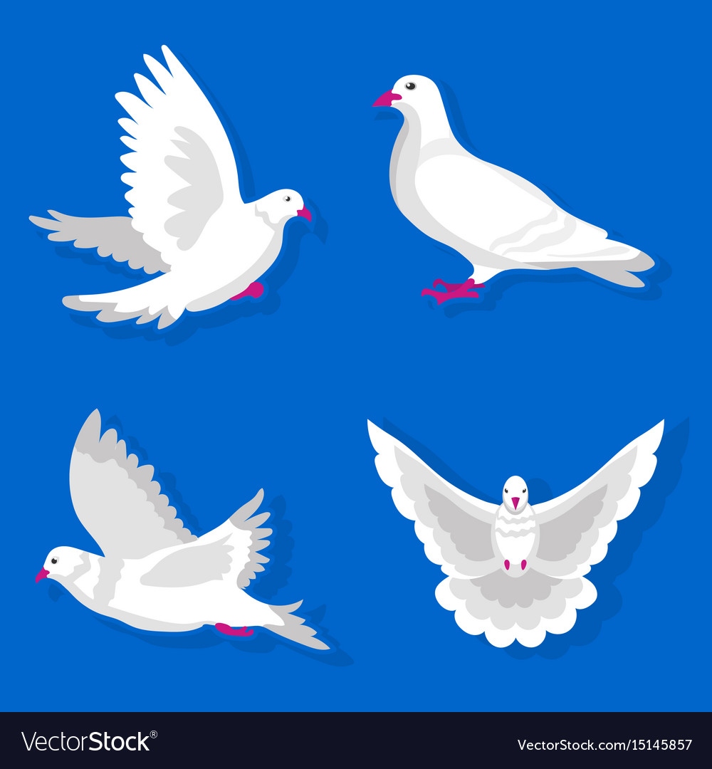 pigeons or white dove birds flying flat royalty free vector