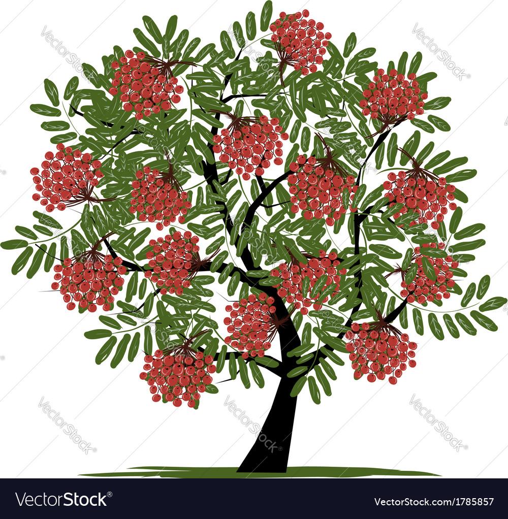 Image result for rowan tree