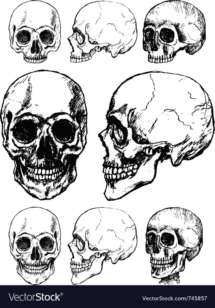 Skull design vector image