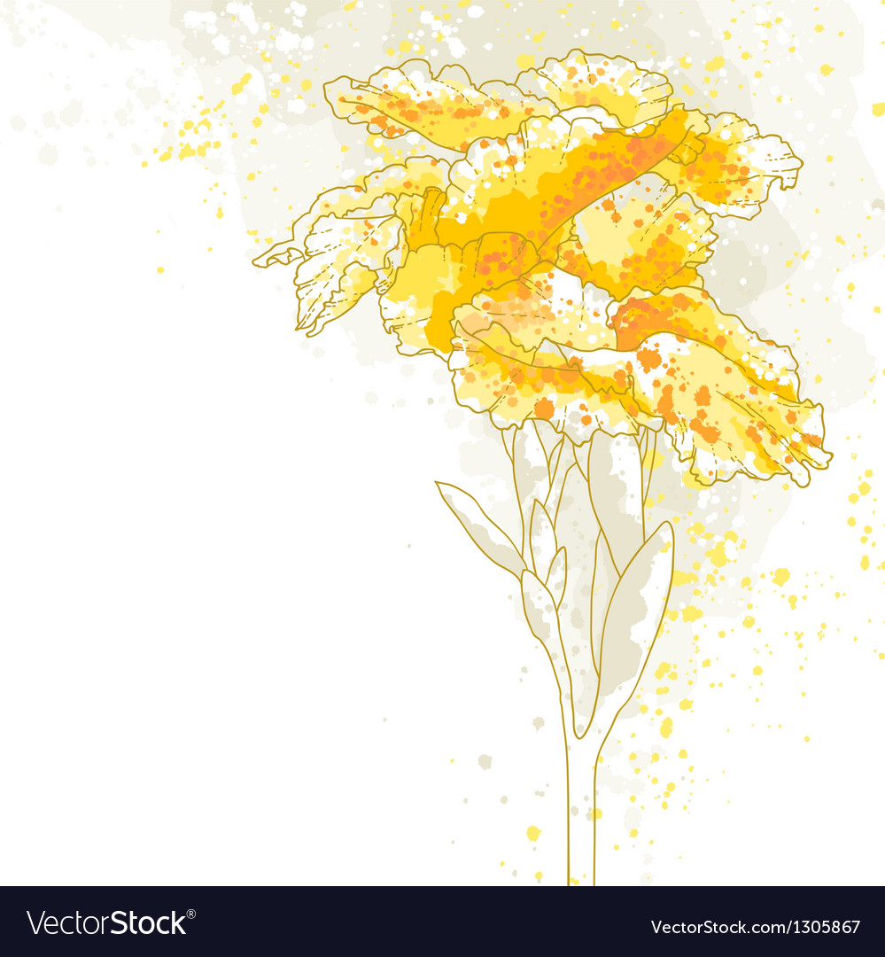 Canna flower on white background vector image