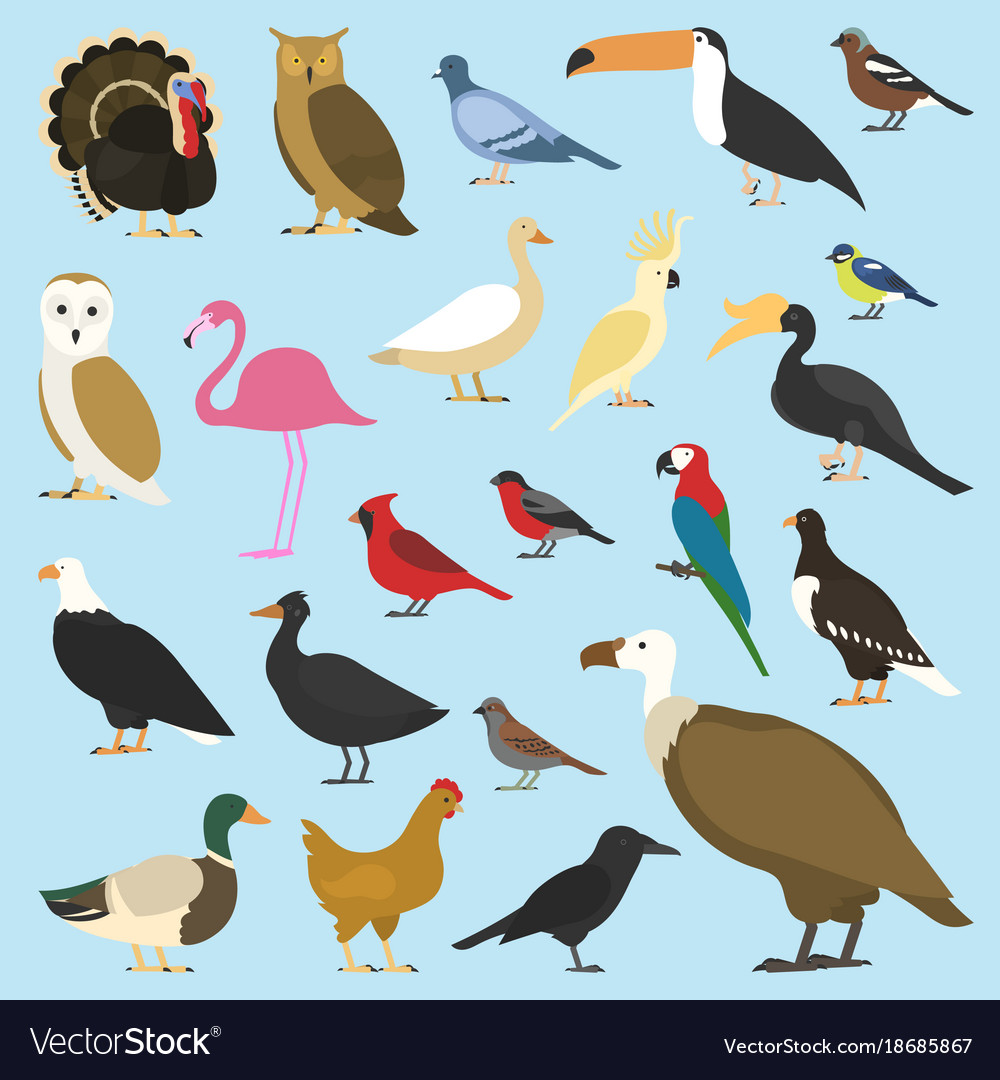 Set domestic birds and tropical animals