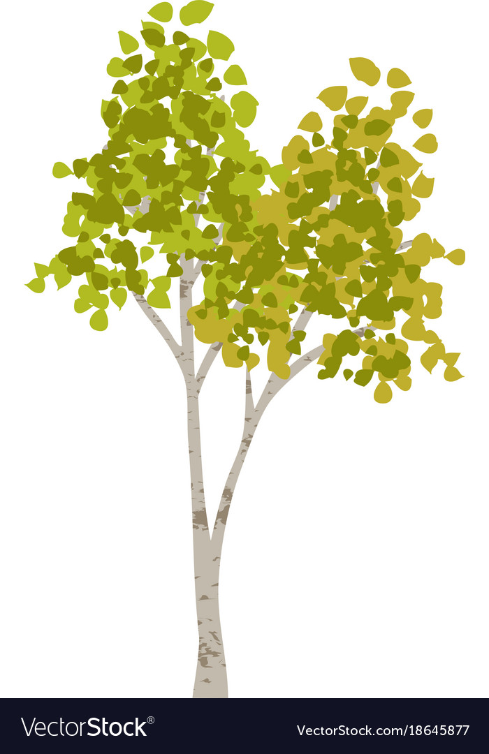 Hand Drawn Aspen Birch Tree Royalty Free Vector Image