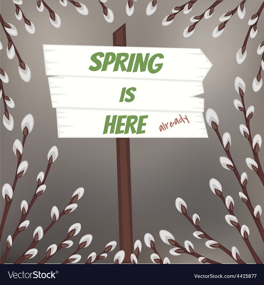 Spring design with pussy willow branches vector image