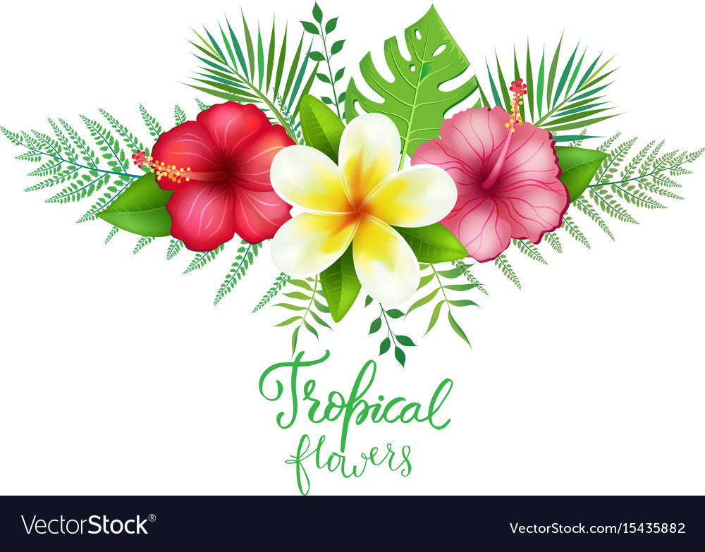Bouquet Of Exotic Tropical Flowers Royalty Free Vector Image