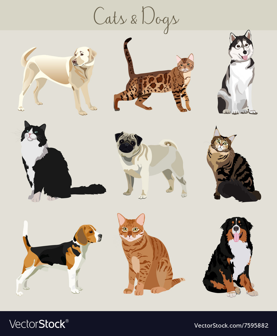 Dogs and cats set Different types