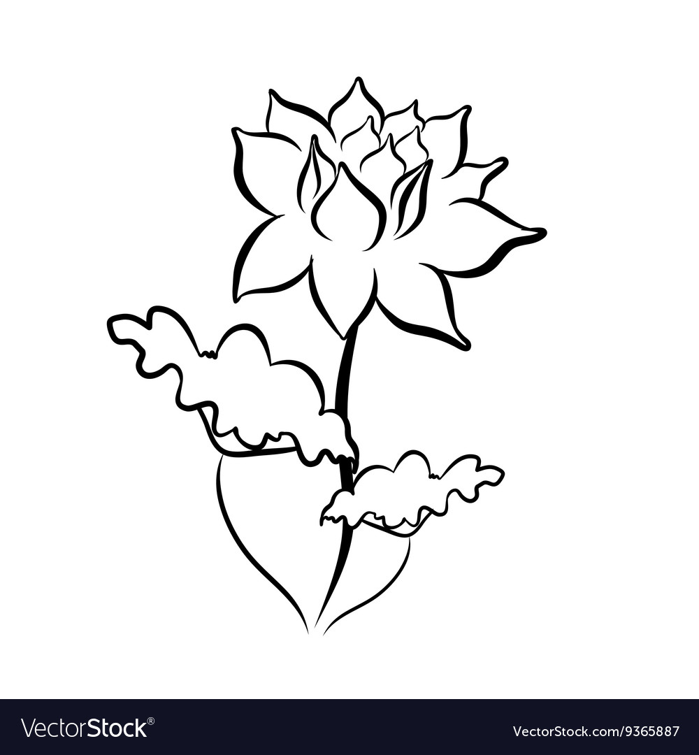 Sketch Line Drawing Of Lotus Flower Royalty Free Vector