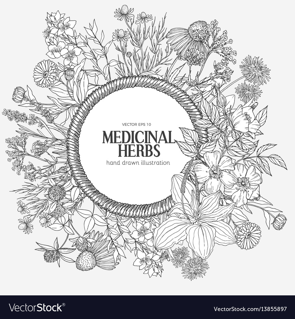 Beautiful vintage rope frame with medicinal herbs vector image