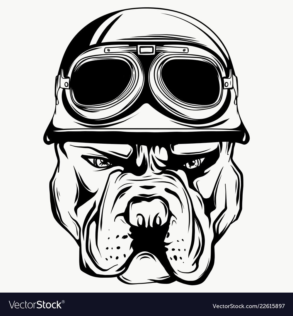 Face of bulldog biker with helmet