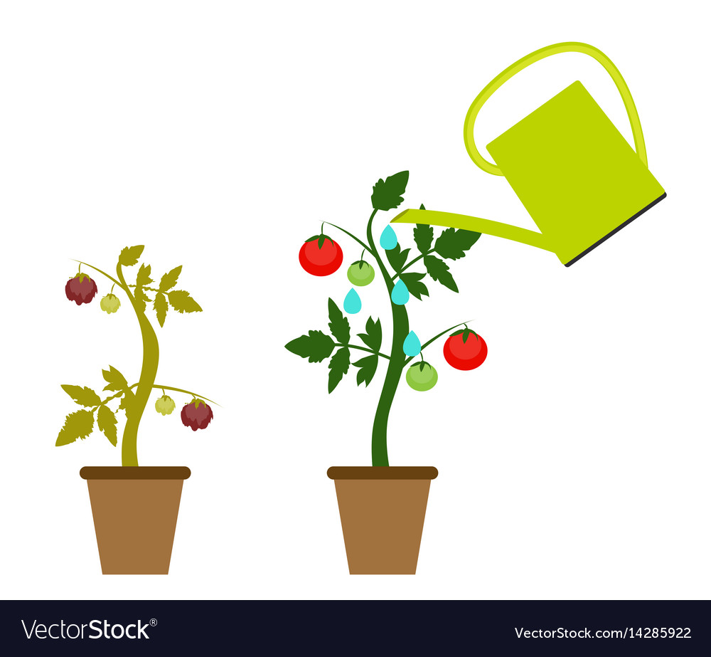 Garden background growing vector