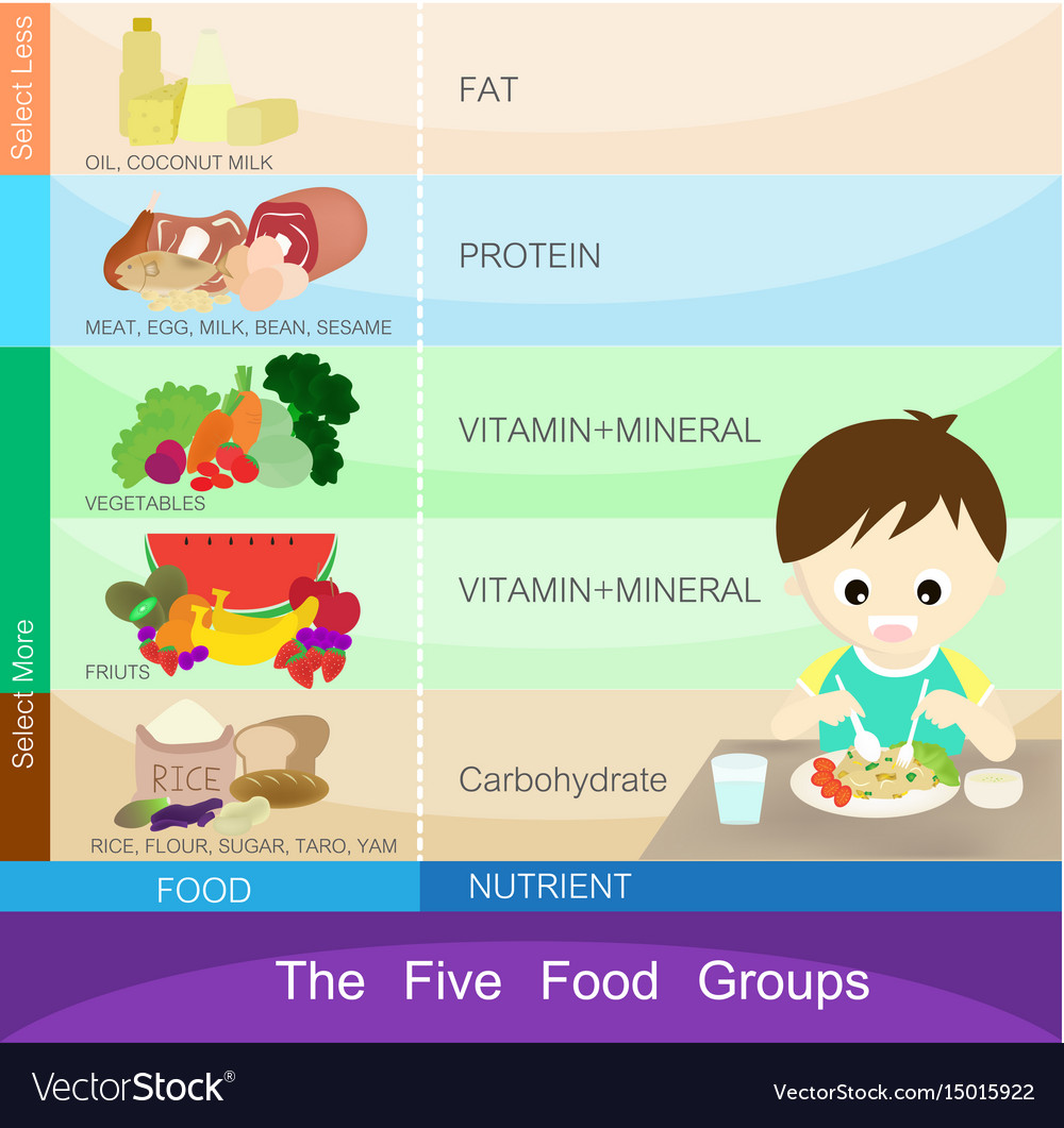 The five food groups vector image