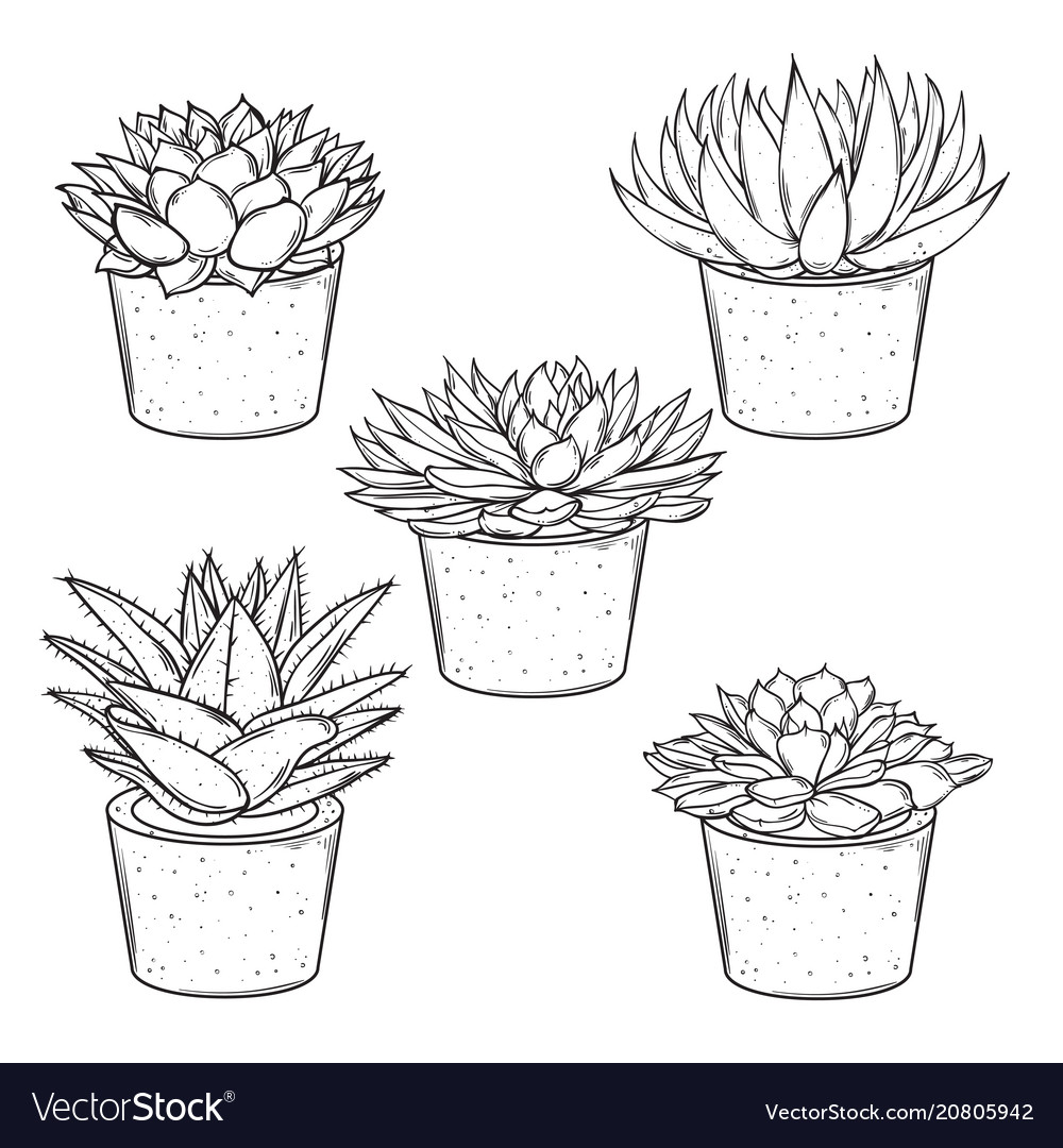 Set of sketches house plants succulents in vector image