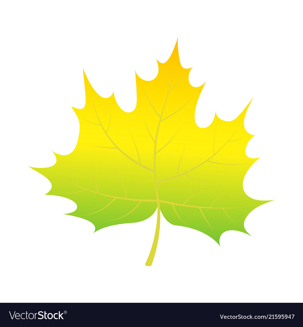 Green leaf of tree icon isometric style