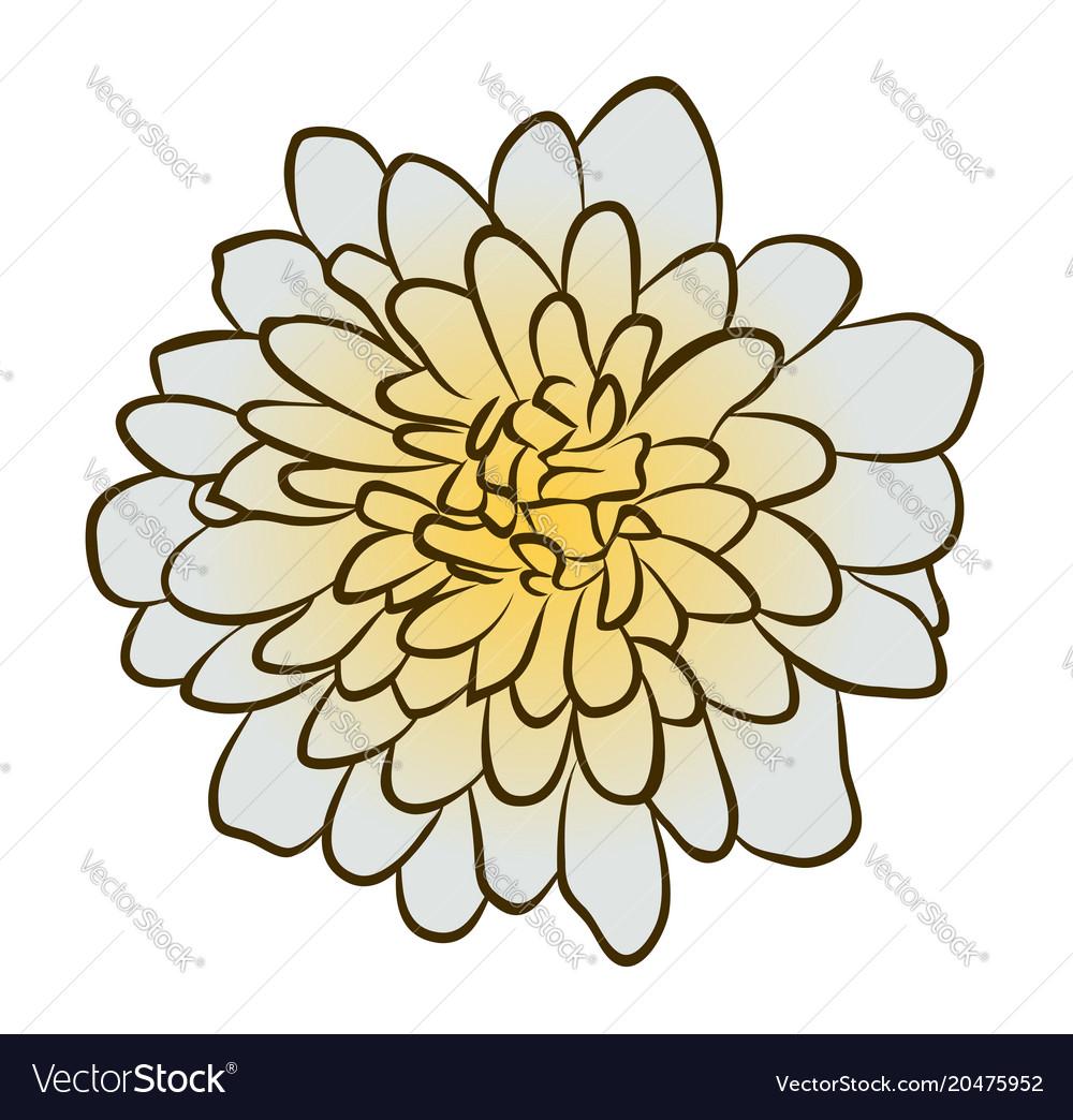 Aster flower vector image