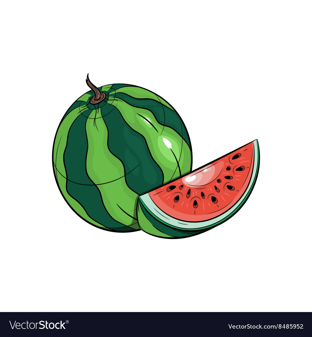 Watermelon on white background vector image