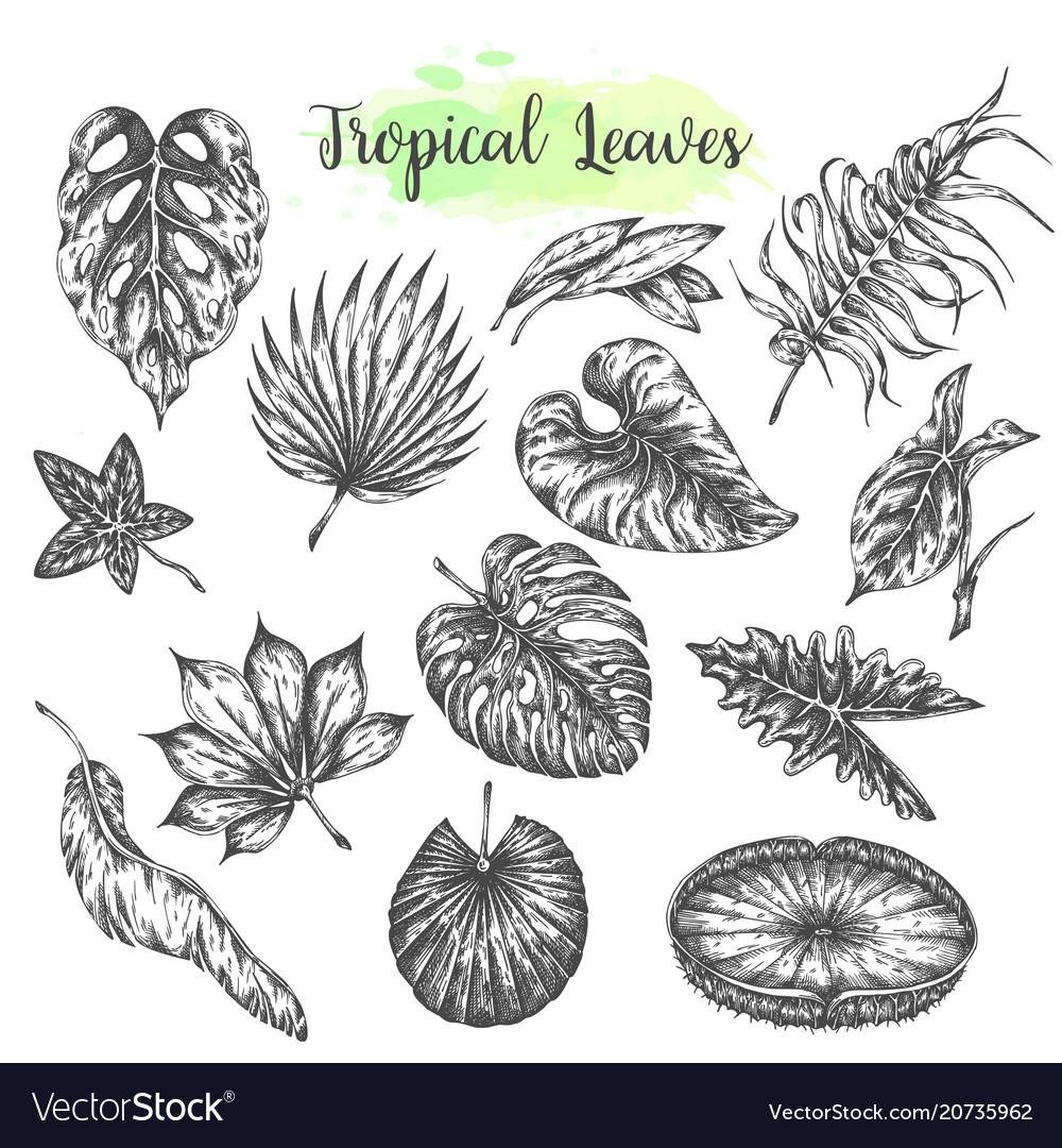 Tropical leaves palm jungle leaf tropic set hand