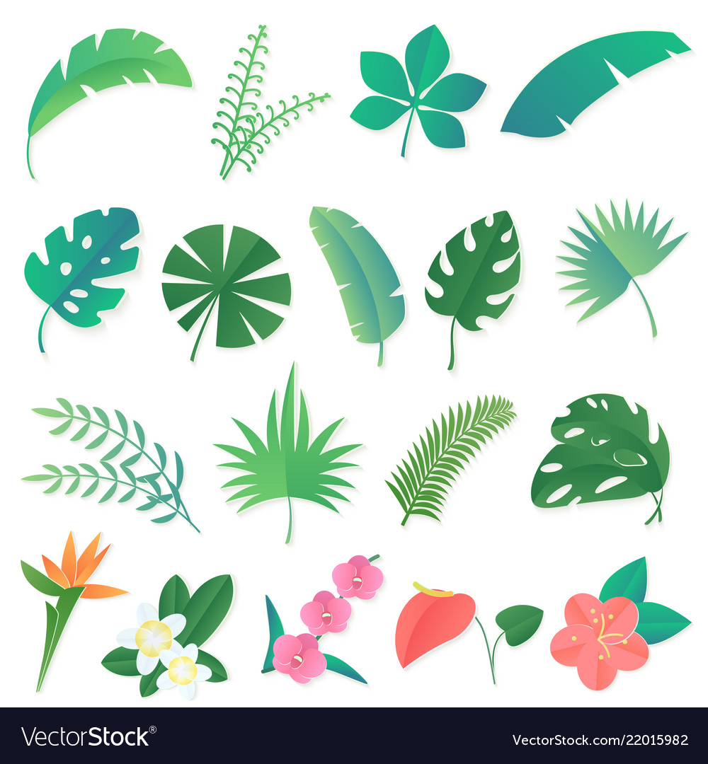 Cartoon set isolated tropical leaves