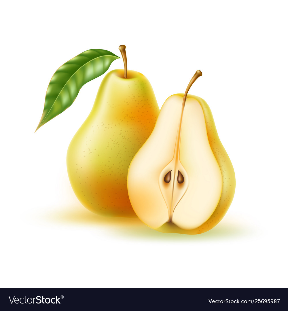 Realistic fresh pear with leaf green fruit vector