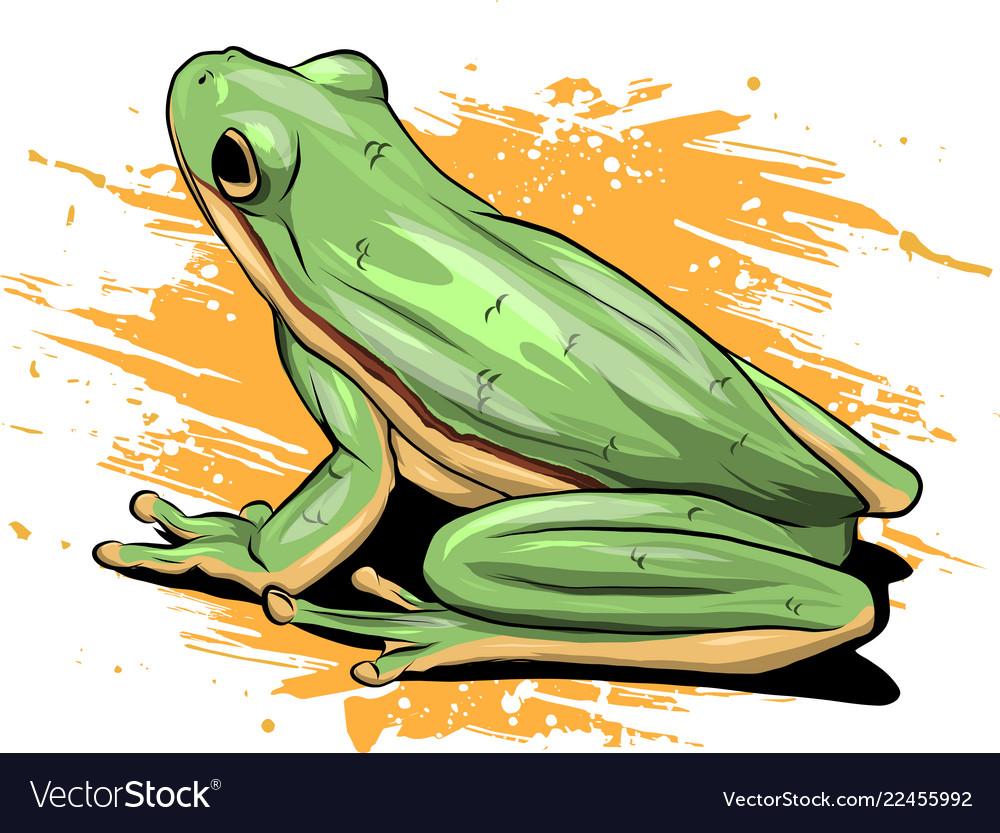 A cartoon green frog drawing