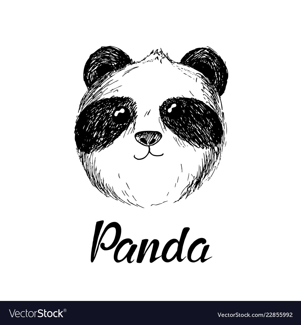 Panda hand drawn sketch