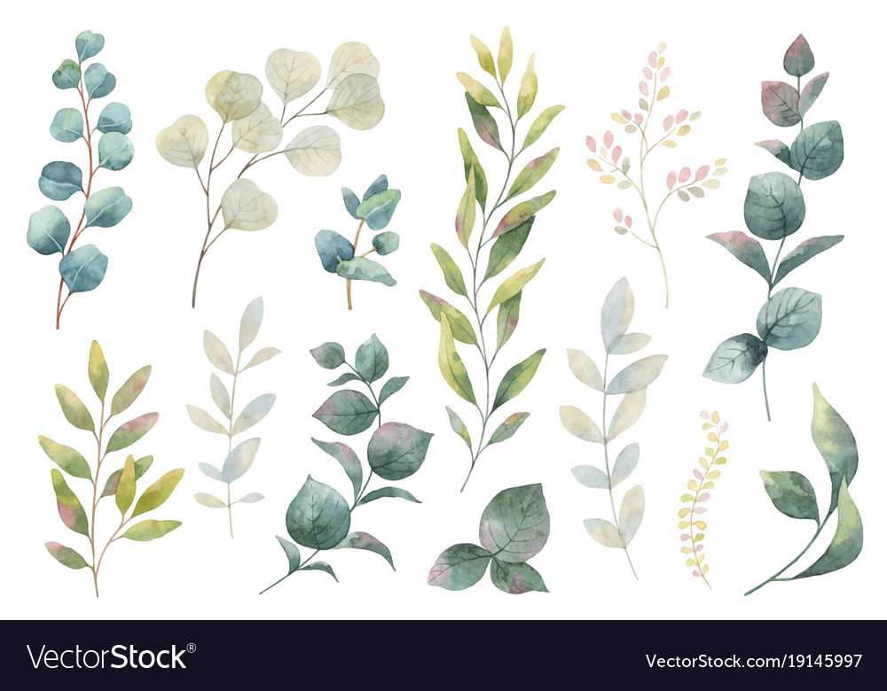 Hand drawn watercolor set of herbs vector image