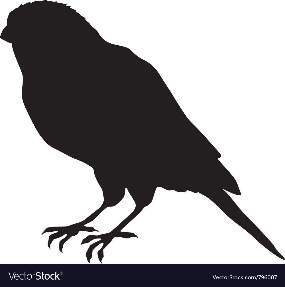 Black silhouette of canary vector image