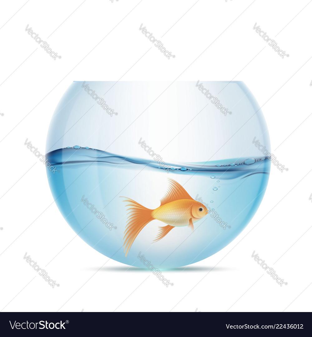 Goldfish floats in a aquarium