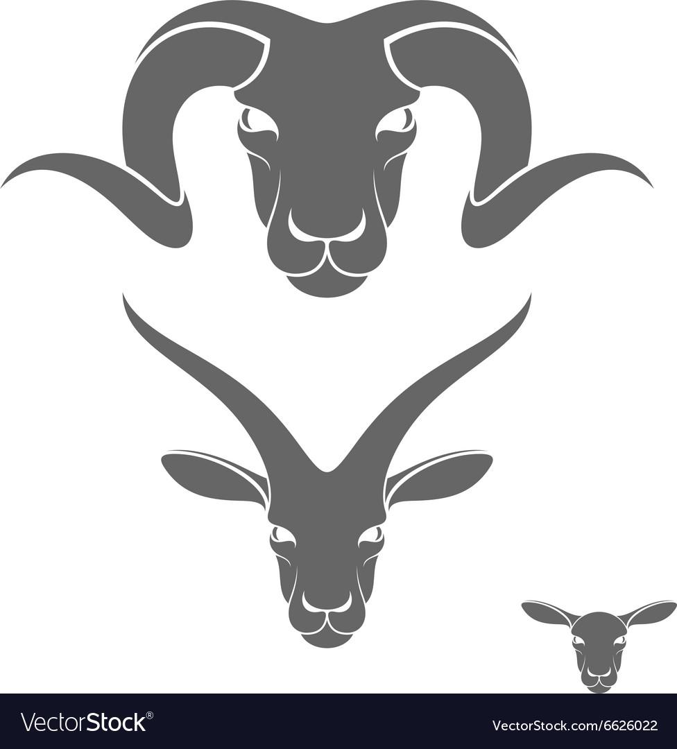 Ram sheep goat