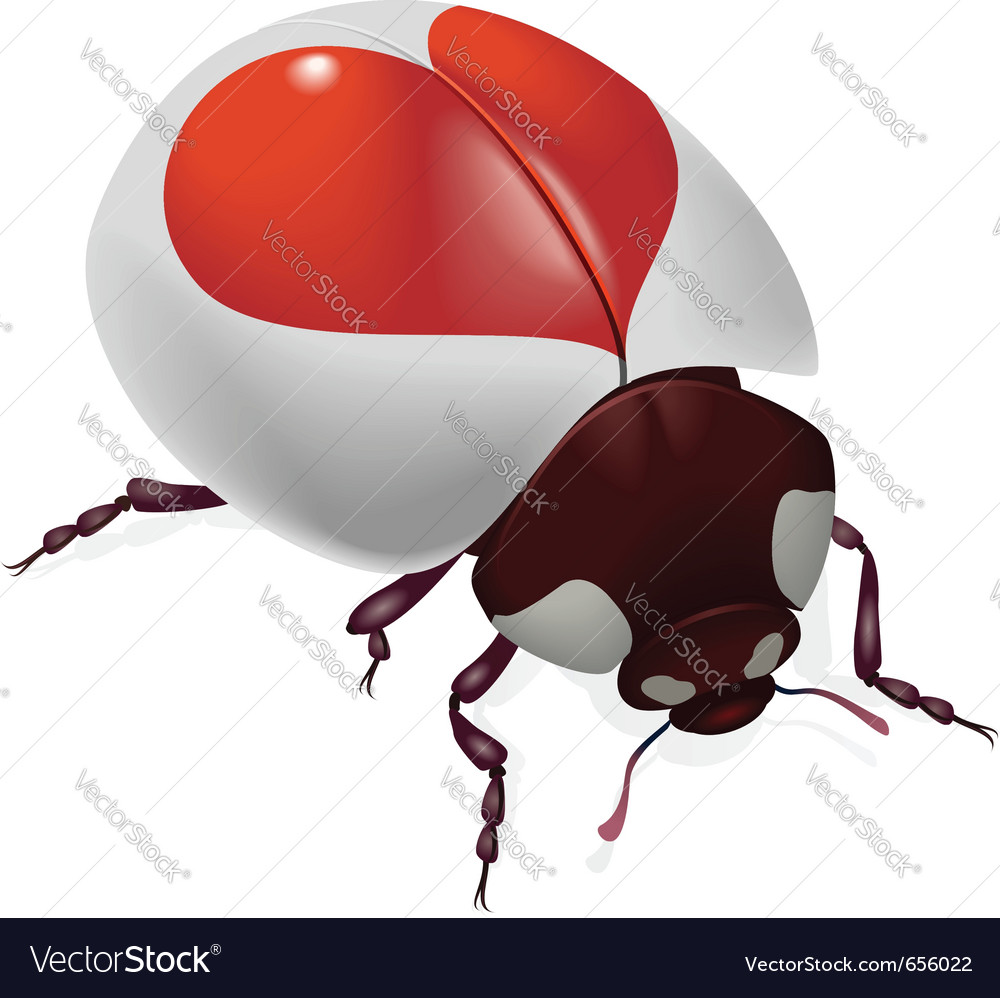 Red heart bug