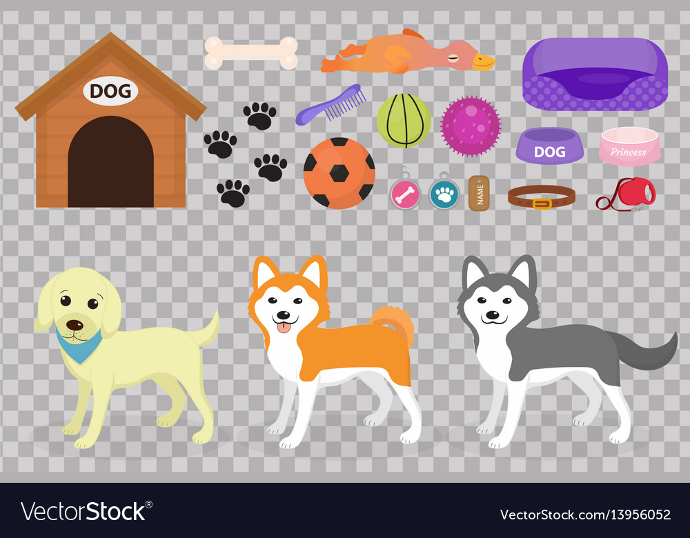 Dogs stuff icon set with accessories for pets