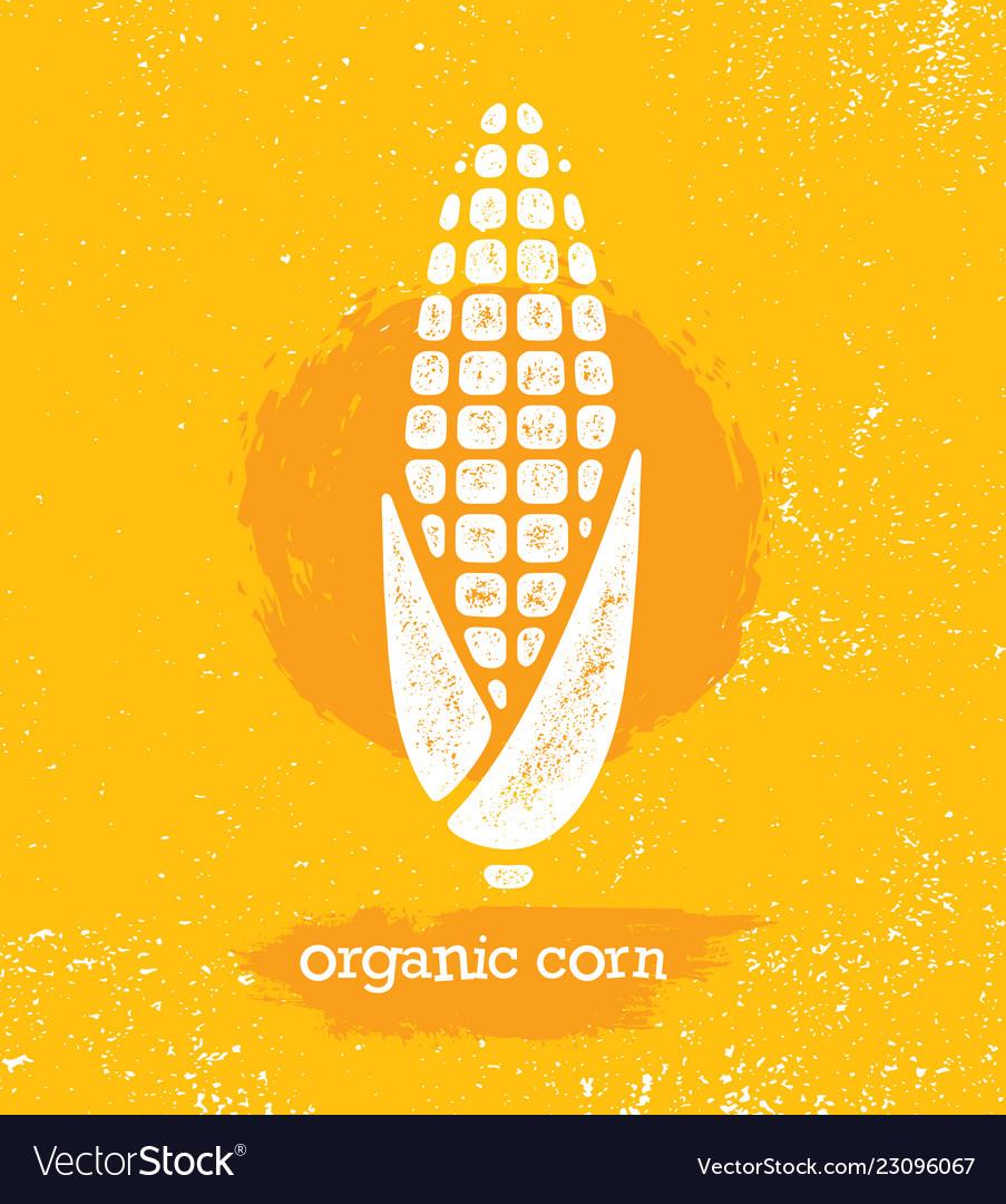 Organic sweet corn on the cob creative