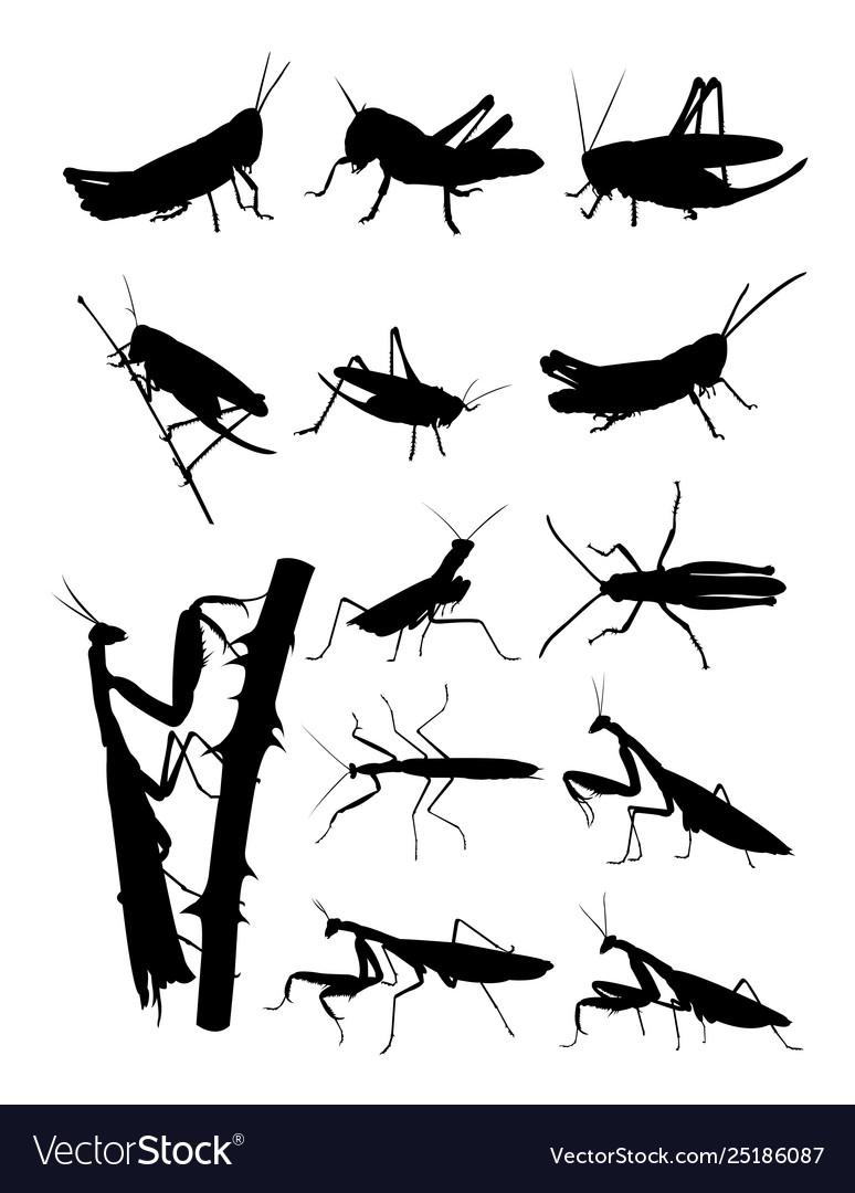 Grasshopper and praying mantis detail silhouettes