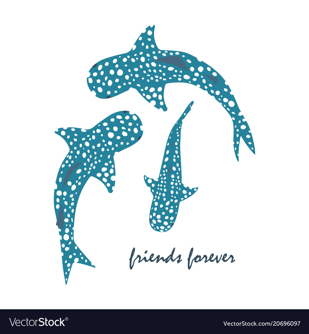 Drawing of whale shark vector image