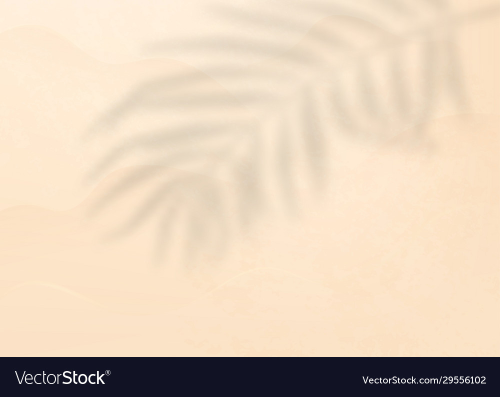 Palm leaf shadow on light pink background