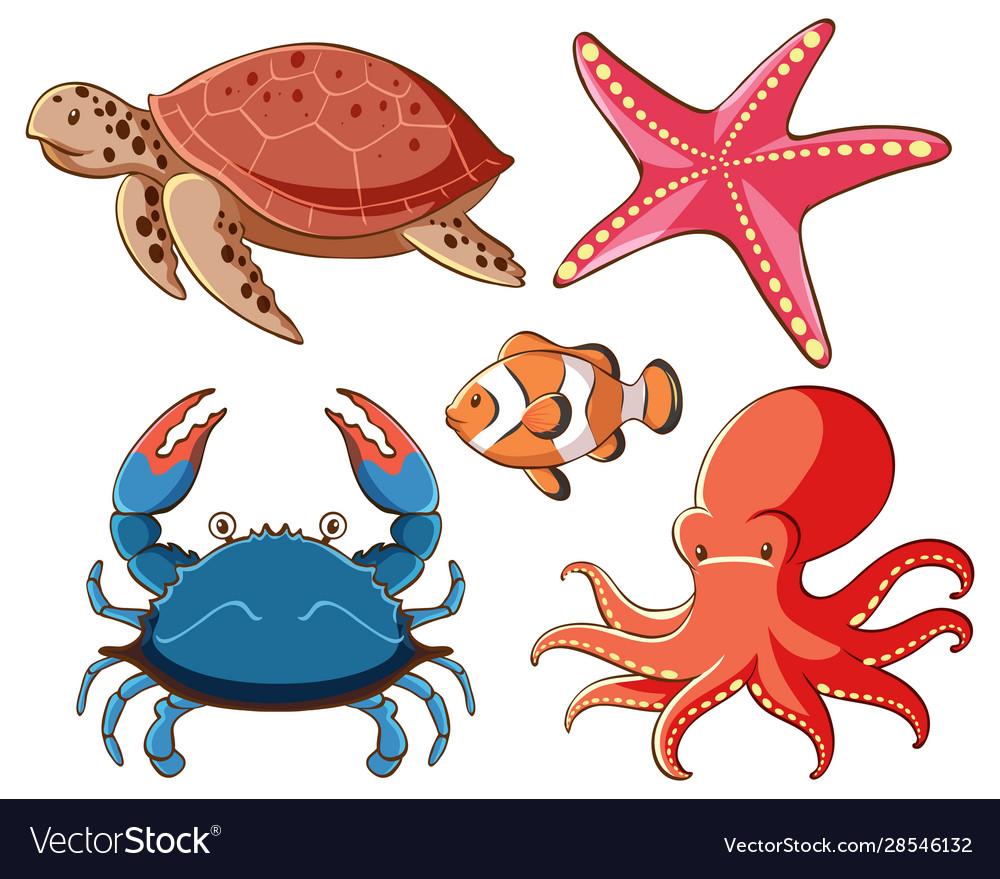 Isolated set sea animals on white background