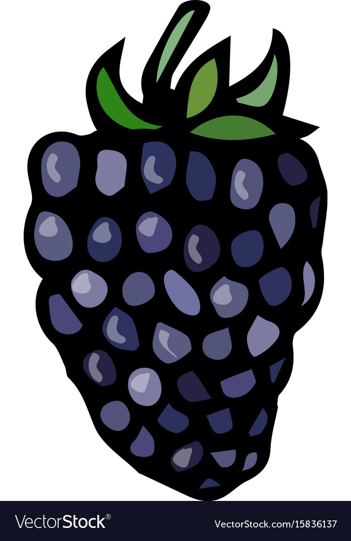 Blackberry doodle style sketch isolated on