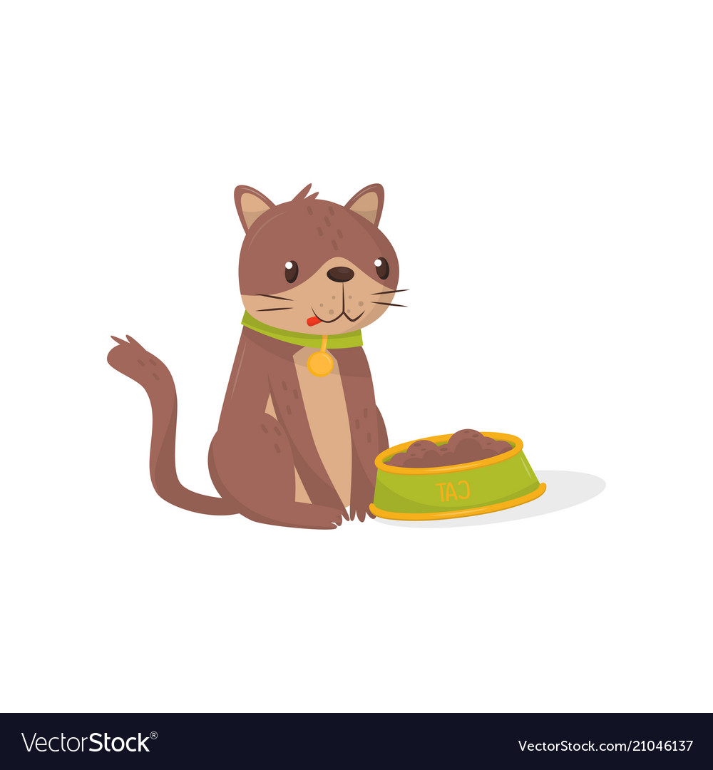 Brown cat sitting next to bowl full of food