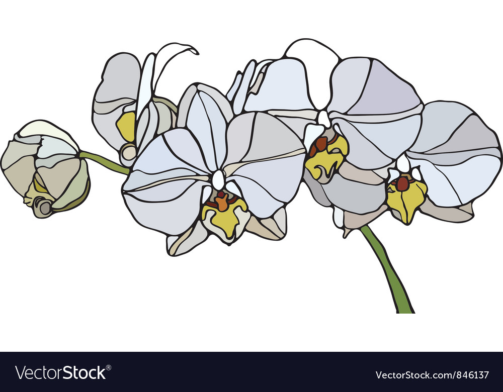 Orchid stained glass vector image